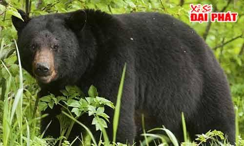Mơ Thấy Con Gấu - Mơ Thấy Con Gấu Đánh Con Gì